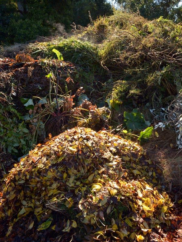 Compost heap at the Dunedin Botanic Garden