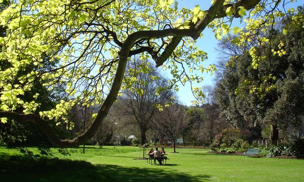 Lower Garden Trees