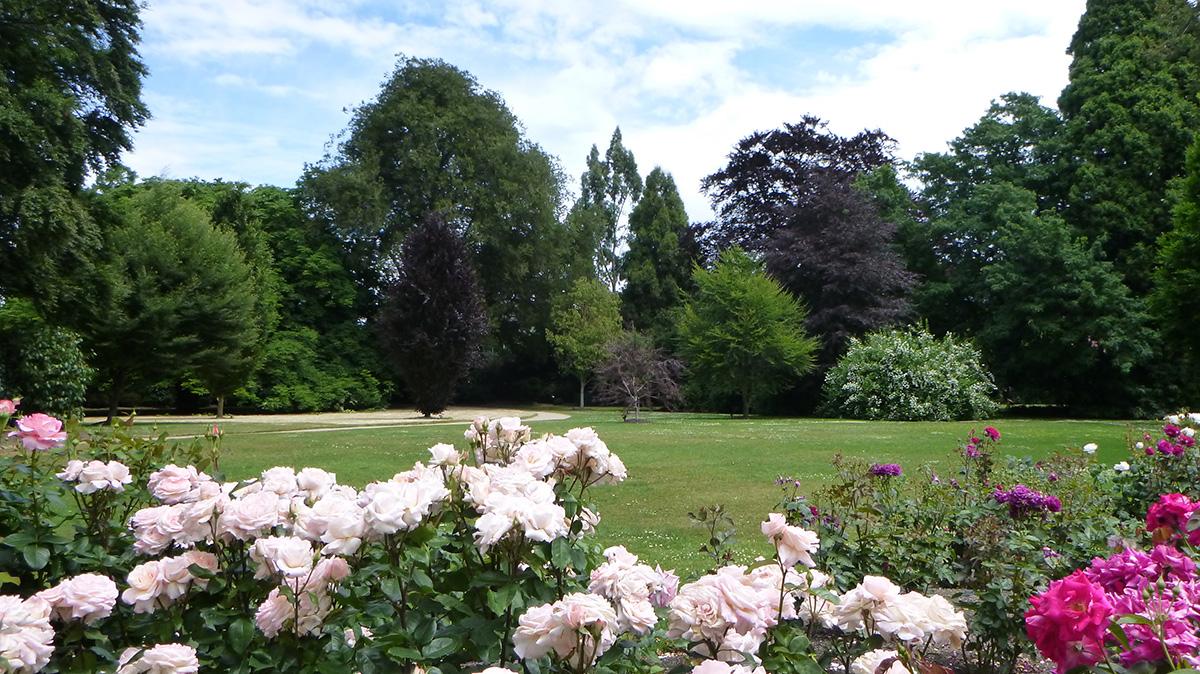 Rose to Specimen Trees.