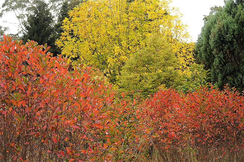 Autumn colour in the Botanic Garden