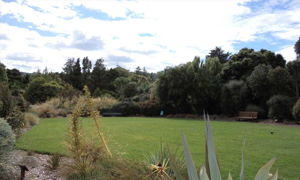 New Zealand Native Lawn, beside Lovelock Avenue
