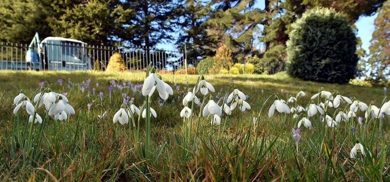 Galanthus 'S. Arnott' originated from the home of Samuel Arnott, the then provost of Dumfries.