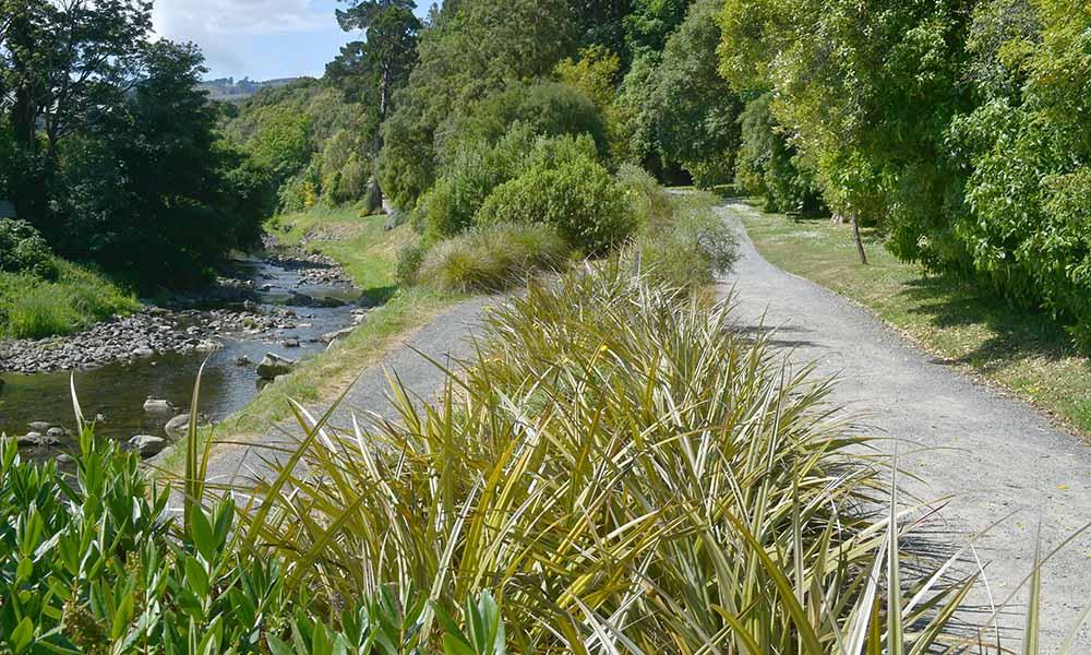 Hillside Bush with Leith tracks at Dunedin Botanic Garden.