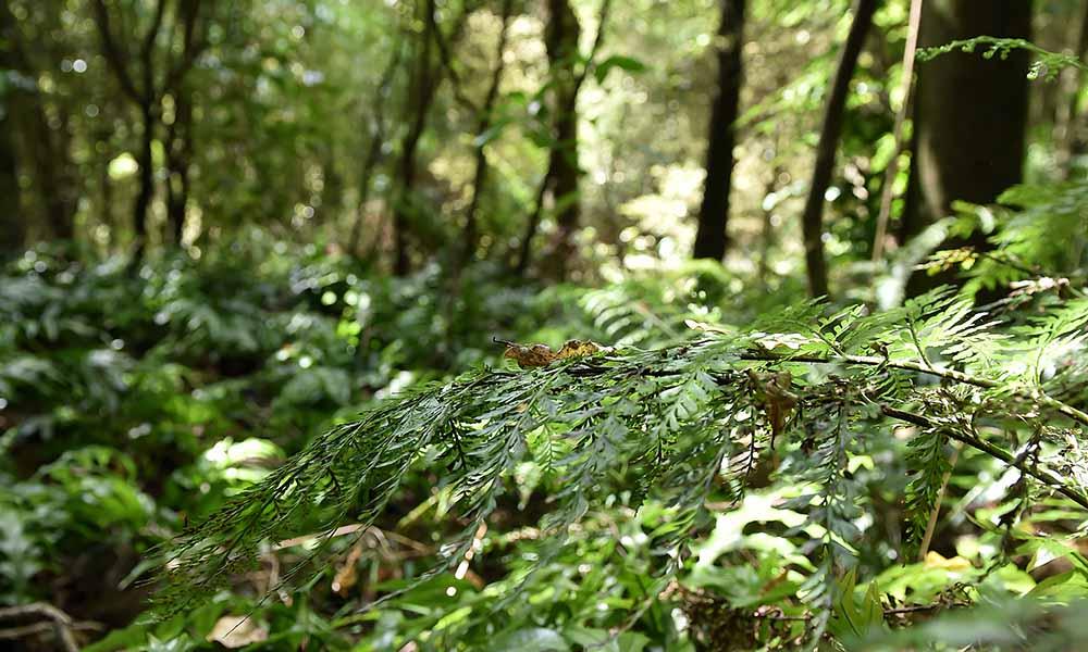 Little Bush at Dunedin Botanic Garden.