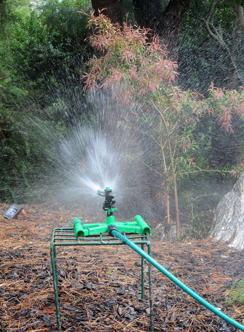 Watering in the Botanic Garden