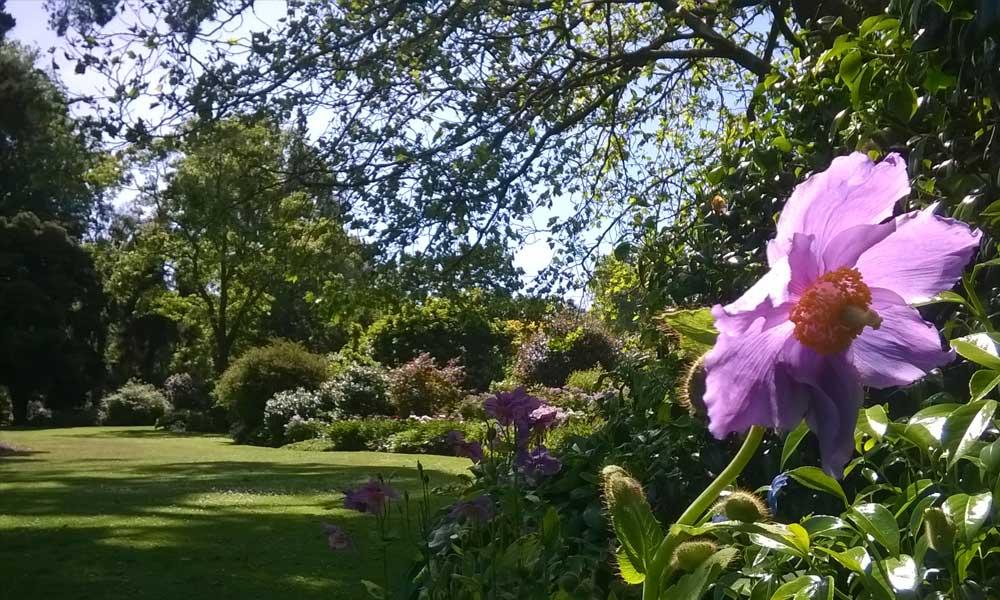Herb Garden Lawn, behind Information Centre