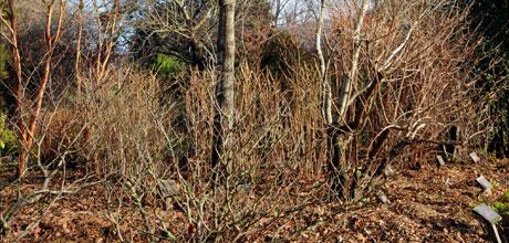 Pruning Deciduous Plants