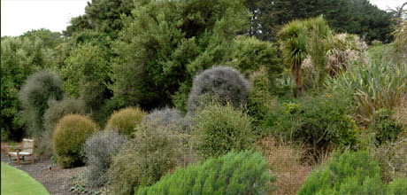 Divaricating Plants