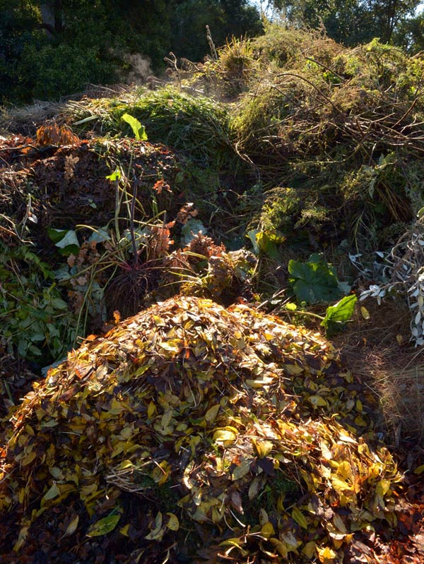 Compost heap at the Dunedin Botanic Garden