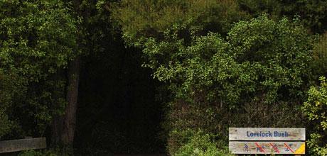 Lovelock bush.